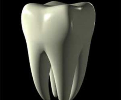 مکانیزم ریختن دندان